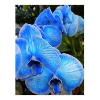 Carte postale mystique bleue d'orchidées