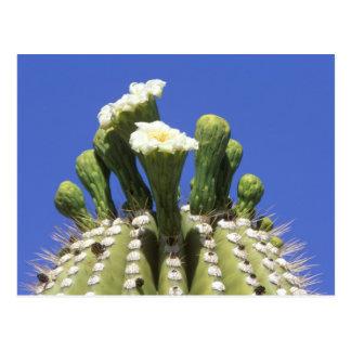 Carte Postale N.A., Etats-Unis, Arizona, Tucson, désert 2 de