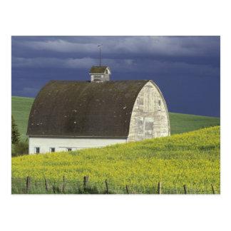 Carte Postale Na, Etats-Unis, Idaho, au sud de Genesse, champ de