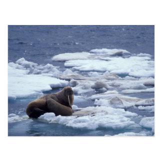 Carte Postale Na, les Etats-Unis, l'Alaska, morse et jeunes sur