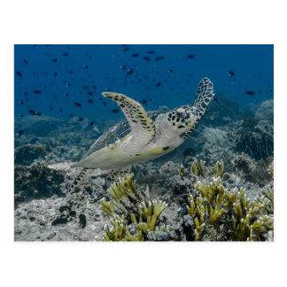 Carte Postale Natation de tortue de mer de Hawksbill