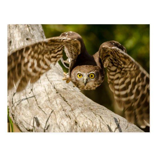 Carte Postale Nature - Barking Owl