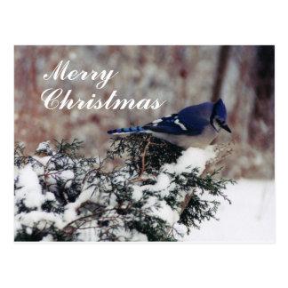Carte Postale neige de geai bleu, joyeuse, Noël - courrier