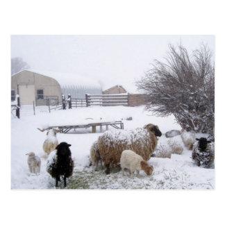 Carte Postale Neige de moutons en avril