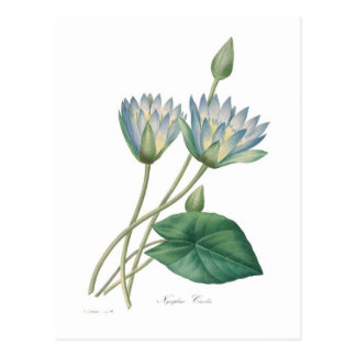 Carte Postale Nénuphar bleu