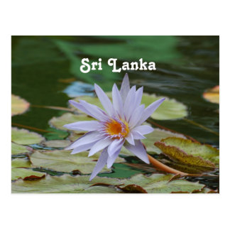 Carte Postale Nénuphar du Sri Lanka