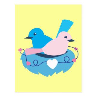 Carte Postale Nid de perruches de roitelets d'amour