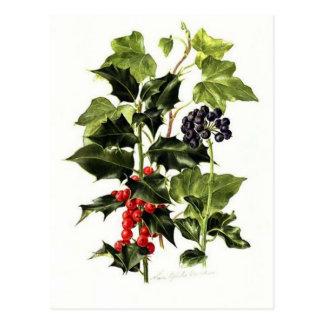 Carte Postale Noël de conception de houx et de lierre