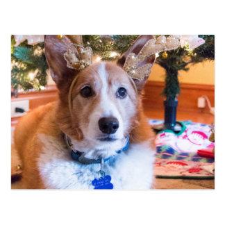 Carte Postale Noël de corgi de Gallois de Pembroke