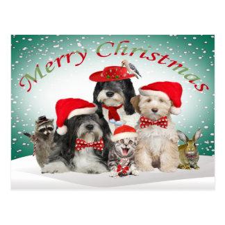 Carte Postale Noël de Terrier tibétain avec des amis