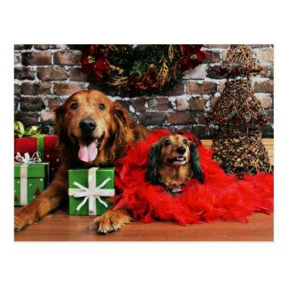 Carte Postale Noël - golden retriever maximum - Doxie - Chloe