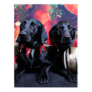 Carte Postale Noël - Labrador - banjo et boomer