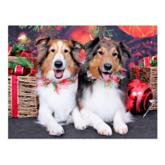 Carte Postale Noël - Zena et emballeur - Shelties