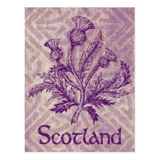 Carte Postale Noeud celtique pourpre de chardon écossais