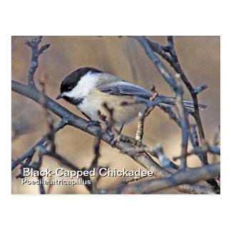 Carte postale Noir-Couverte de Chickadee