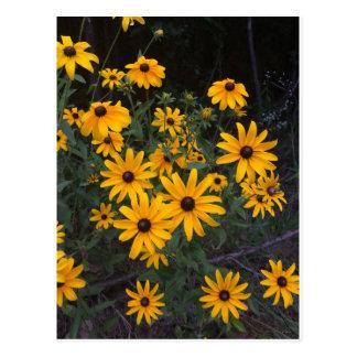 Carte postale Noir-Eyed de Susans de fleur sauvage