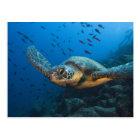 Carte Postale Noircissez la tortue (verte) (agassizi de