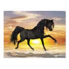 Carte postale noire de cheval