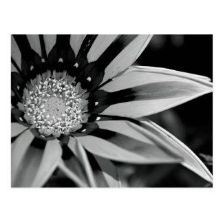 Carte postale noire et blanche de fleur sauvage