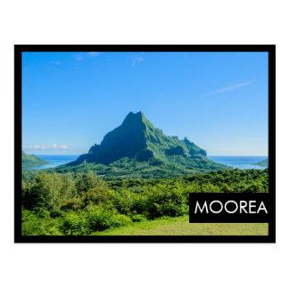 Carte postale noire verte tropicale de cadre de