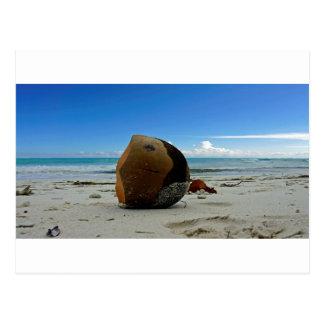 Carte Postale noix de coco des Caraïbes