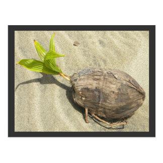 Carte Postale Noix de coco sur la plage