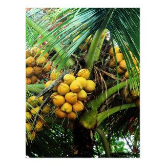 Carte Postale noix de coco sur l'arbre