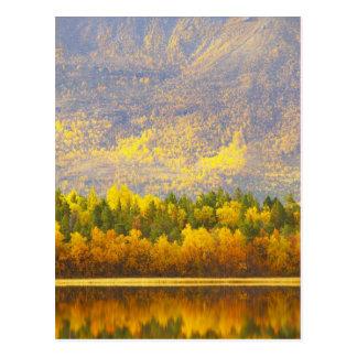 Carte Postale Norvégien Laponie dans les couleurs d'automne