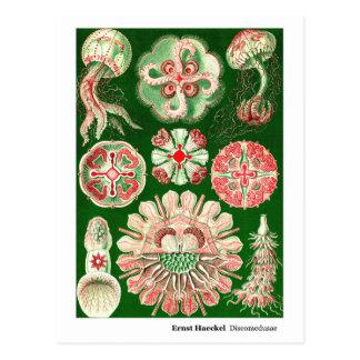 Carte Postale Nouvelle adresse d'Ernst Haeckel Discomedusae