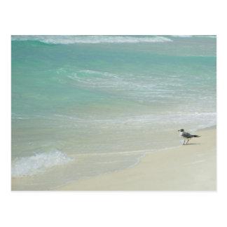 Carte Postale Observant le petit pain de vagues dedans
