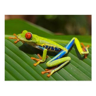 Carte postale observée par rouge de grenouille