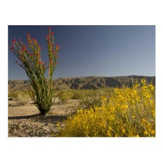 Carte Postale Ocotillo et séné de désert