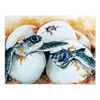 Carte Postale Oeufs de Hatchling de Honu (tortue de mer verte)