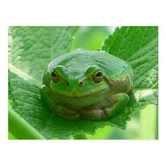 Carte Postale Oh jour heureux - fin de grenouille verte