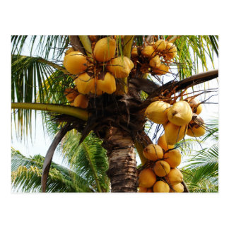 Carte Postale Oh noix de coco