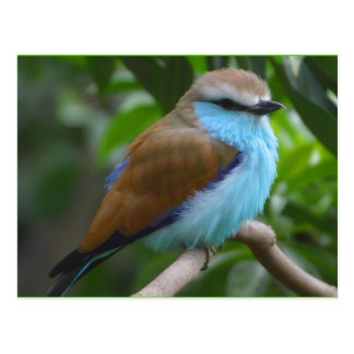 Carte Postale Oiseau : Beau Brown et oiseau bleu