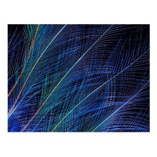 Carte Postale Oiseau bleu d'abrégé sur plume de paradis