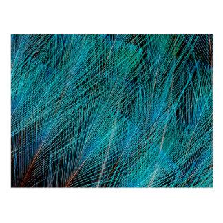 Carte Postale Oiseau bleu des plumes de paradis