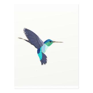 Carte Postale Oiseau bleu et vert de ronflement