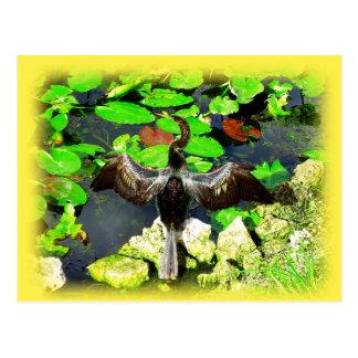 Carte Postale Oiseau d'Anhinga, parc national de marais, FL