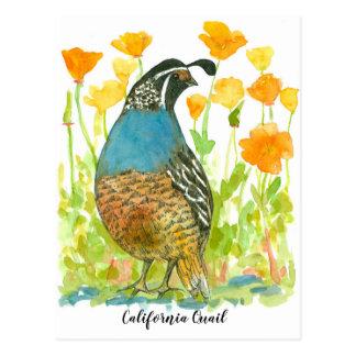 Carte Postale Oiseau de cailles de pavots de Californie