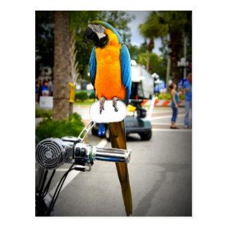 Carte Postale Oiseau de cycliste