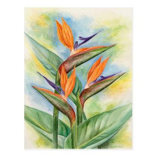 Carte Postale Oiseau de l'art de fleur de paradis - multi