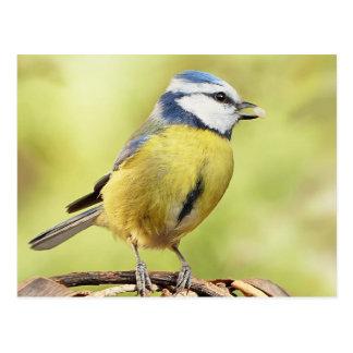 Carte Postale Oiseau de mésange bleue