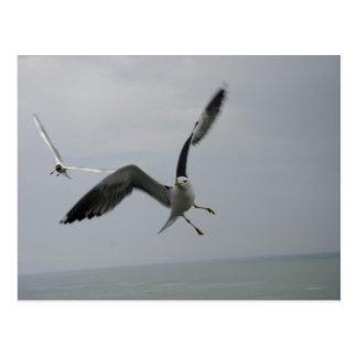 Carte Postale Oiseau de mouette