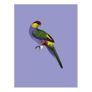 Carte Postale Oiseau de perroquet de perruche couvert par rouge