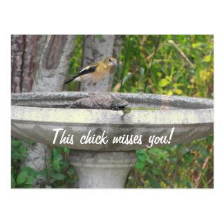 Carte Postale Oiseau de regard fâché avec votre expression
