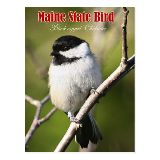 Carte Postale Oiseau d'état du Maine - Chickadee Noir-couvert