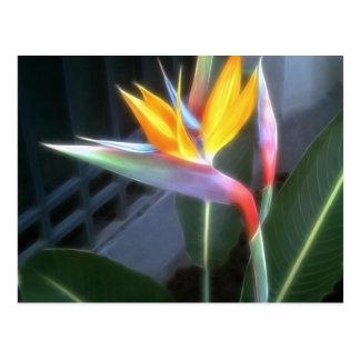 Carte Postale Oiseau du paradis 10 rêveur