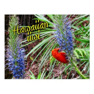 Carte Postale Oiseau hawaïen d'iiwi alimentant sur le grayana de